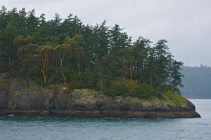 Madrona trees skirting a saltwater beach and holding back a stand of fir trees.
